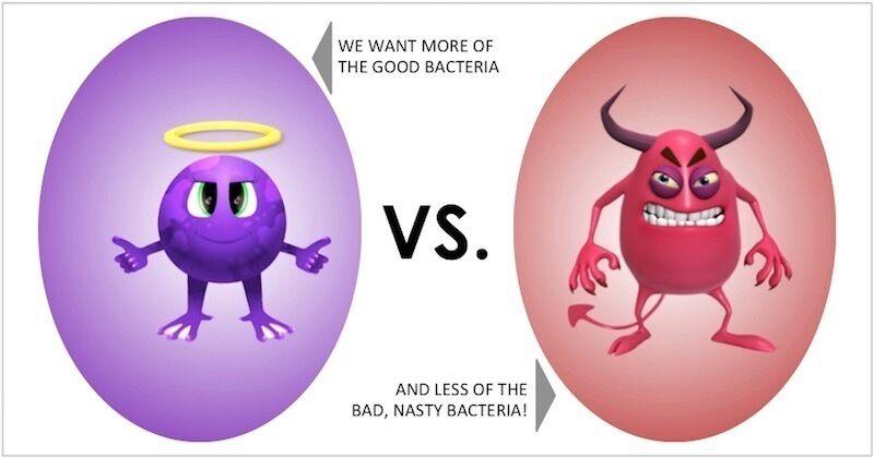 البكتيريا قد لا تكون مضرة فى كل الأحيان