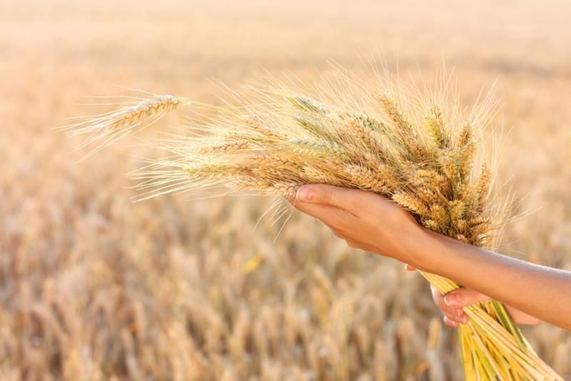 """""""   مفاجأة """" طريقة صنع سيريلاك القمح بالمنزل"""