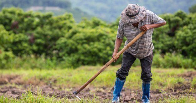 المزارع المخادع